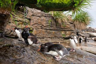 Penguin Waterfall